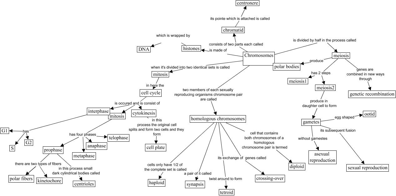 Printables Genetic Variation Worksheet genetic variation worksheet imperialdesignstudio engineering humans body used process plants genetic