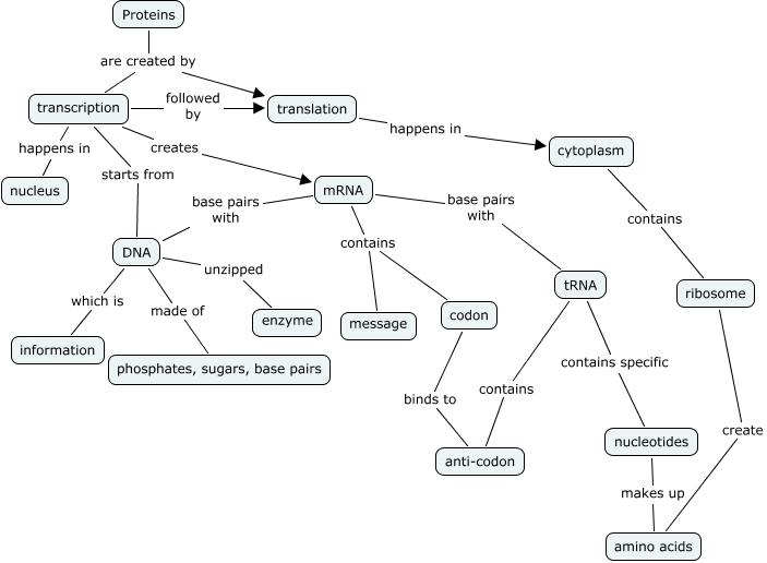 Protein Synthesis Concept Map